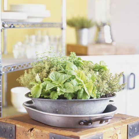 Ingredient, Leaf vegetable, Leaf, Serveware, Fines herbes, Herb, Dishware, Bowl, Annual plant, Mixing bowl,