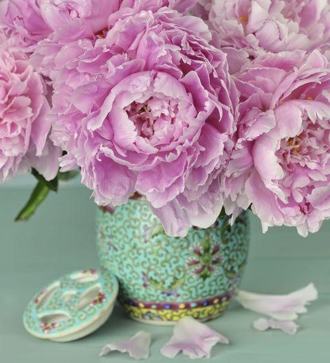 Blue, Petal, Flower, Purple, Pink, Serveware, Cut flowers, Flowering plant, Bouquet, Artifact,