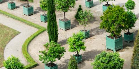 Plant, Shrub, Garden, Groundcover, Hedge, Arch, Landscaping, Urban design, Courtyard, Evergreen,