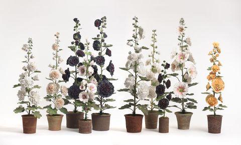 Flowerpot, Flower, Botany, Petal, Flowering plant, Houseplant, Plant stem, Interior design, Annual plant, Flower Arranging,