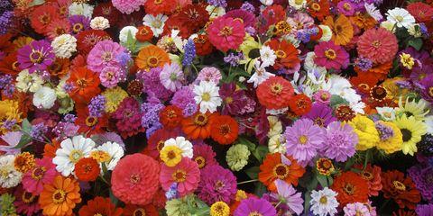Flower, Plant, Flowering plant, Petal, Spring, Floristry, Annual plant, Floral design, Wildflower, Cut flowers,