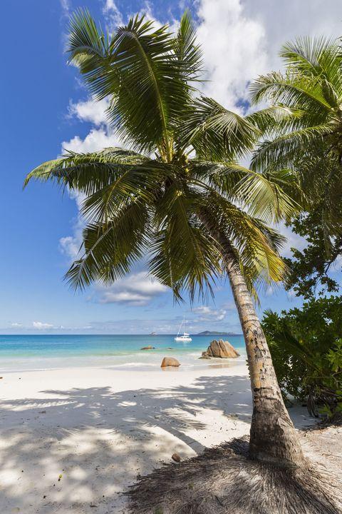 Body of water, Sky, Coastal and oceanic landforms, Shore, Tree, Ocean, Arecales, Coast, Beach, Woody plant,