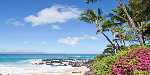 Body of water, Sky, Petal, Coastal and oceanic landforms, Flower, Landscape, Shore, Coast, Ocean, Woody plant,