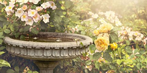 Petal, Flower, Botany, Flowering plant, Garden, Shrub, Water feature, Rose order, Rose family, Rose,