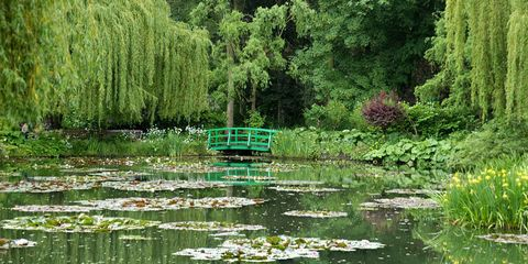 Body of water, Vegetation, Nature, Natural environment, Natural landscape, Plant, Green, Wetland, Pond, Marsh,