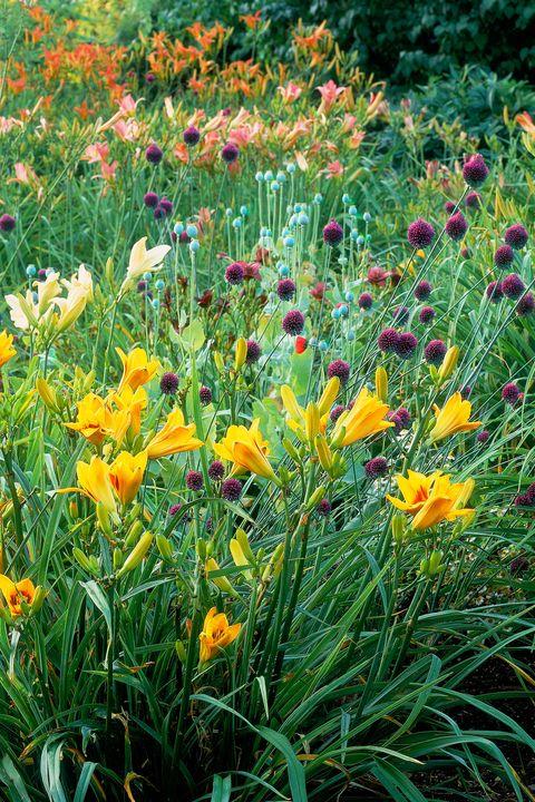 Plant, Flower, Plant community, Petal, Botany, Flowering plant, Wildflower, Garden, Spring, Groundcover,