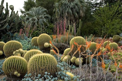 "<p><strong>What: </strong>The Huntington Library, Art Collections, and Botanical Gardens</p> <p><strong>Where: </strong>San Marino, California</p> <p><strong>Why: </strong>Ten of the 120 acres here are devoted solely to cacti and succulents—over 4,000 kinds in all. With their odd shapes and vivid blooms (some larger than the thorny greens themselves), the springtime landscape resembles a coral reef. A Mediterranean Revival–style library holds artifacts like a Gutenberg Bible and letters penned by George Washington and Abraham Lincoln, while the rose garden, curated by renowned hybridizer Tom Carruth, features a few of his greatest hits, including 'Betty Boop,' a spunky variety edged with red-tipped petals; and 'Julia Child,' a buttery-yellow bloom with a licorice fragrance. (<a href=""http://www.huntington.org/"" target=""_blank"">huntington.org</a>)</p> <p><strong>While You're There: </strong>Historic shopping mecca Old Pasadena is 10 minutes away; try Café Santorini's tuna tartare with spicy harissa and wasabi aioli. (<a href=""http://www.cafesantorini.com"" target=""_blank"">cafesantorini.com</a>) </p>"