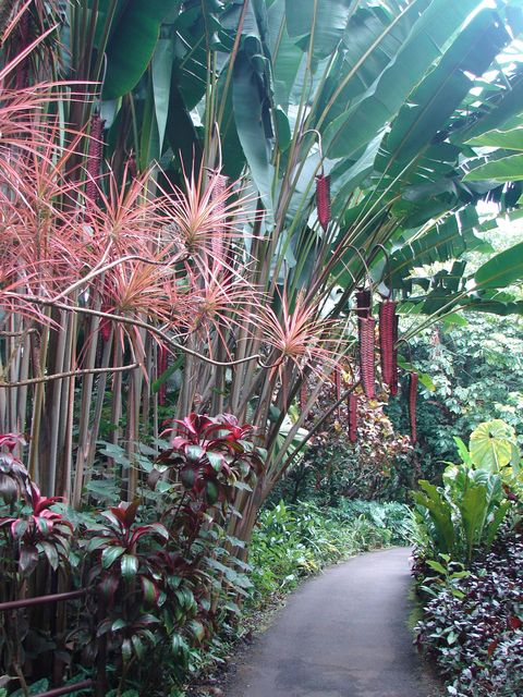 "<p><strong>What: </strong>Hawaii Tropical Botanical Garden</p> <p><strong>Where: </strong>Papaikou, The Big Island</p> <p><strong>Why: </strong>Mineral-rich volcanic soil provides a fertile breeding ground for some 2,500 different tropical plants at this lush, 17-acre haven founded by an amateur nature lover in 1977. Enter at the top of a 200-foot-tall cliff and wind your way down a boardwalk through a kaleidoscope of lipstick-red, heart-shaped anthurium and heliconias with orange and yellow dagger points. (They aren't actually sharp; plus, the welcoming motto here is ""Please touch!"") Along the route, you'll also encounter a three-tiered waterfall, palm trees covered with air plants, and a chorus of macaws. The path takes you to a secluded beach where you might catch a seal lounging in the sun. (<a href=""http://www.htbg.com/"" target=""_blank"">htbg.com</a>) </p> <p><strong>While You're There: </strong>Sample a delicious (and truly local) favorite—coconut-crusted calamari—at Café Pesto, a 15-minute drive away. (<a href=""http://www.cafepesto.com/"" target=""_blank"">cafepesto.com</a>)</p>"