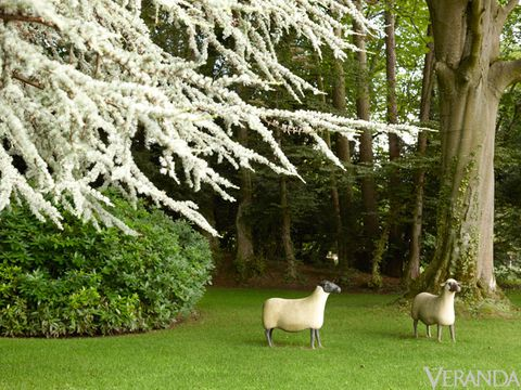Grass, Sheep, Sheep, Shrub, Pasture, Terrestrial animal, Groundcover, Trunk, Twig, Livestock,