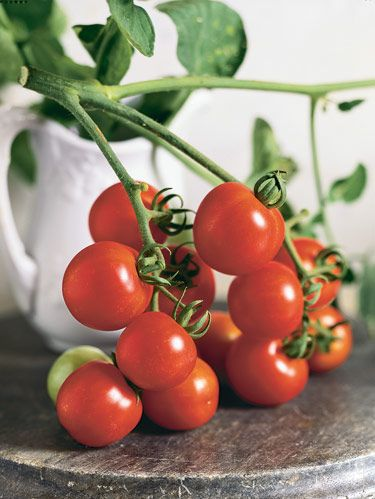 'Large Red Cherry' typifies the ubiquitous round tomato of American salad fare.