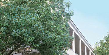 New York designer Eric Cohler's home in Charleston, S.C. Faux bois loveseat by Mecox Gardens.