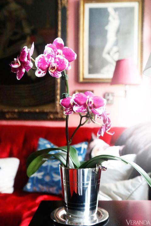 Petal, Flower, Pink, Magenta, Interior design, Flowering plant, Centrepiece, Serveware, Picture frame, Purple,