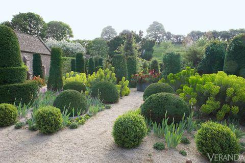 Shrub, Plant, Garden, Plant community, Hedge, Groundcover, Evergreen, Grass family, Landscaping, Botanical garden,