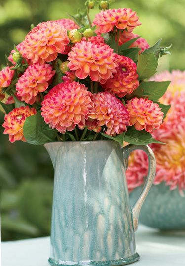Plant, Flower, Petal, Pink, Serveware, Orange, Artifact, Centrepiece, Vase, Peach,