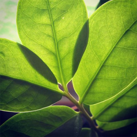 Green, Leaf, Botany, Terrestrial plant, Colorfulness, Close-up, Herb, Herbaceous plant, Macro photography, Laurel family,