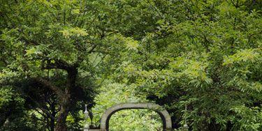 Vegetation, Grass, Shrub, Plant, Green, Garden, Hedge, Plant community, Groundcover, Botany,