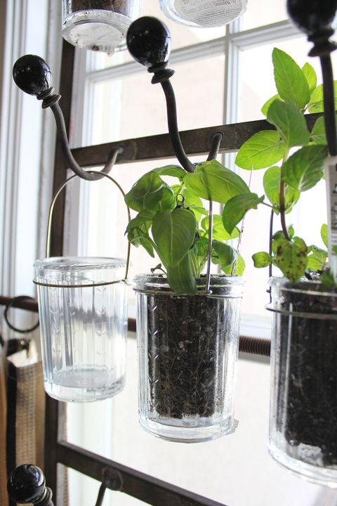 Glass, Serveware, Leaf, Drinkware, Interior design, Flowerpot, Houseplant, Plant stem, Annual plant, Kitchen utensil,