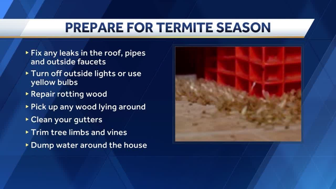 How to protect your home against termites