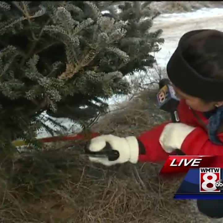 Windham farm welcomes holiday shoppers