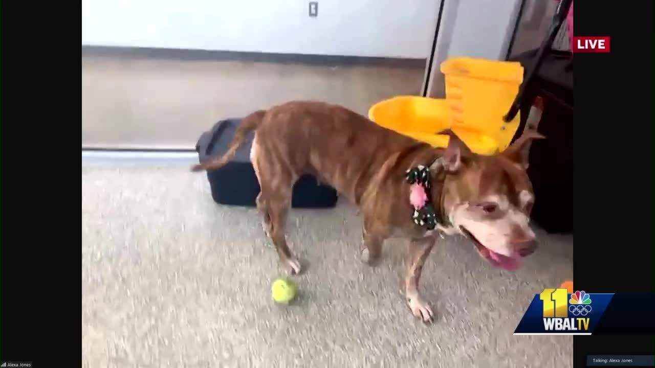 BARCS encourages animal adoption with a special pup