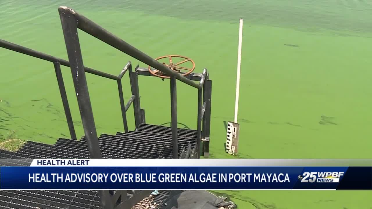 Local lawmakers call for end to Lake Okeechobee discharges as new toxic algae warning issued
