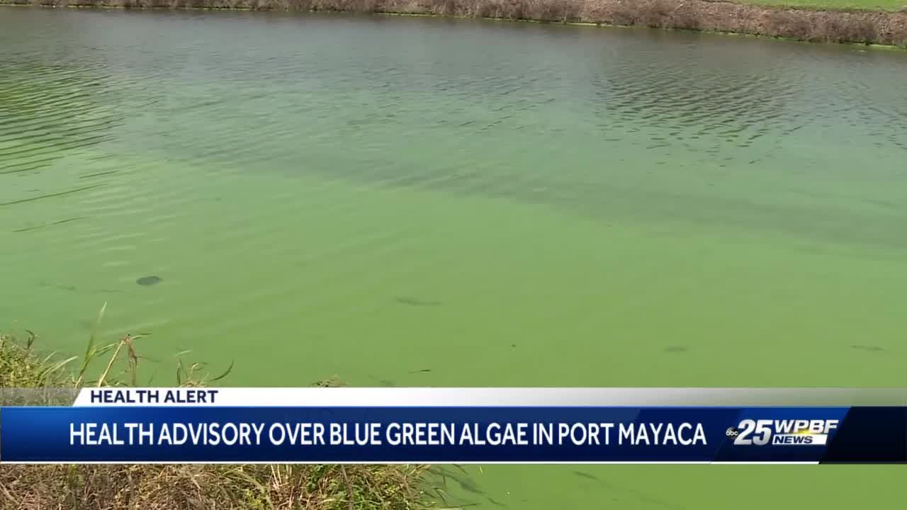 Lawmakers call for change amid toxic algae bloom