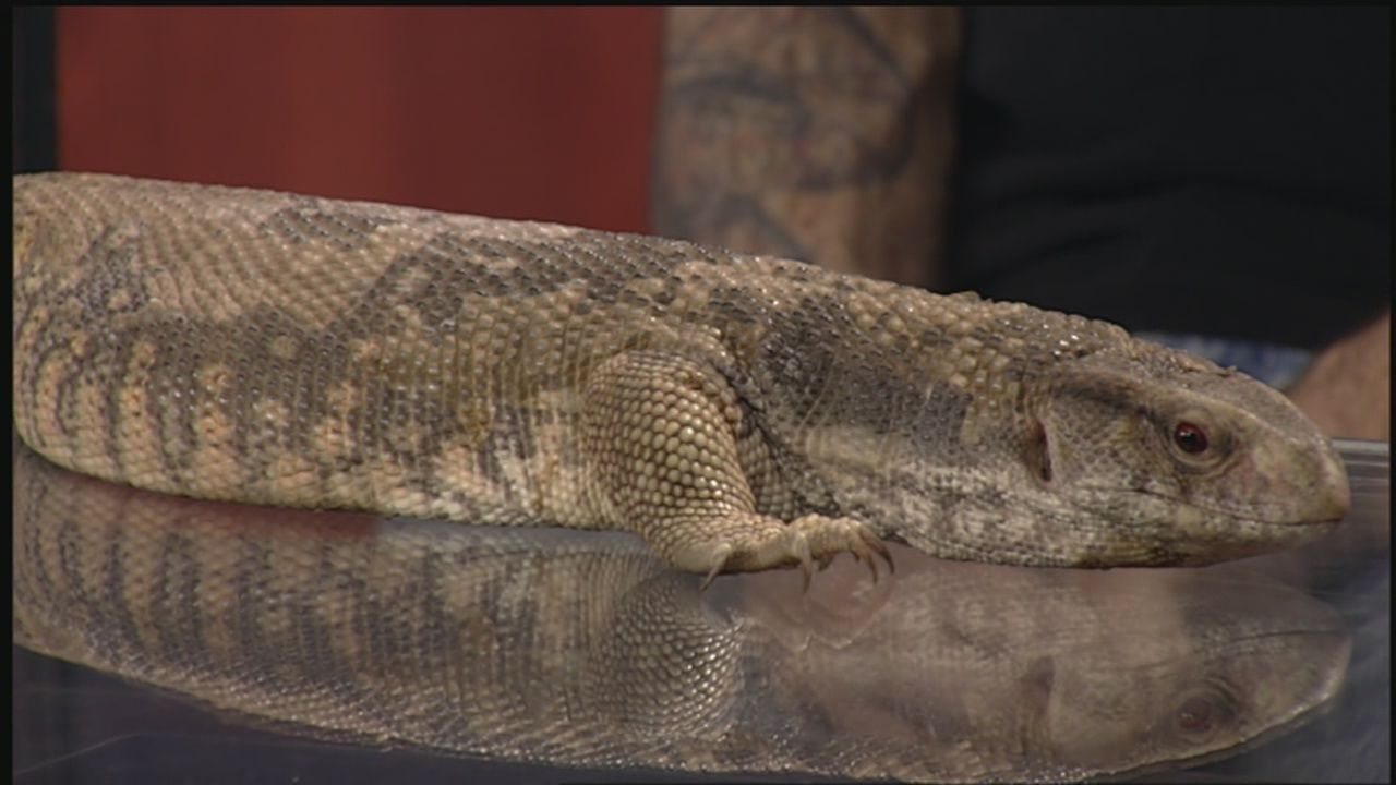 Indiana Reptile Breeders Expo returns to Clarksville