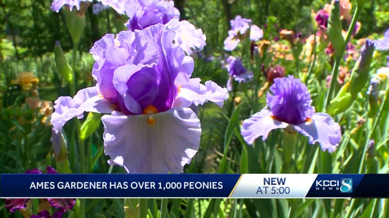 WATCH: Ames woman shares garden made of 1,000 flowers
