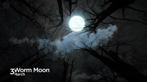 A Rare Blue Full Moon Will Occur On Halloween Night 2020