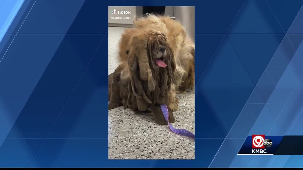 Severely matted dog in Kansas City goes viral after getting hair clipped