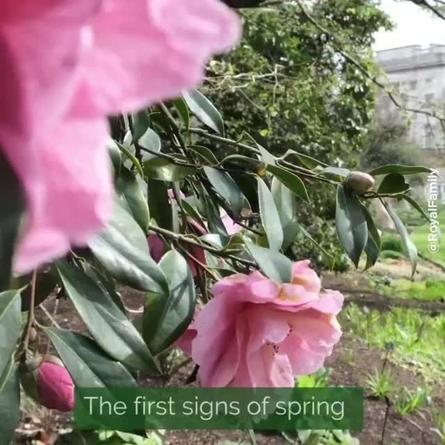 The royal family shares the first signs of spring at Buckingham Palace