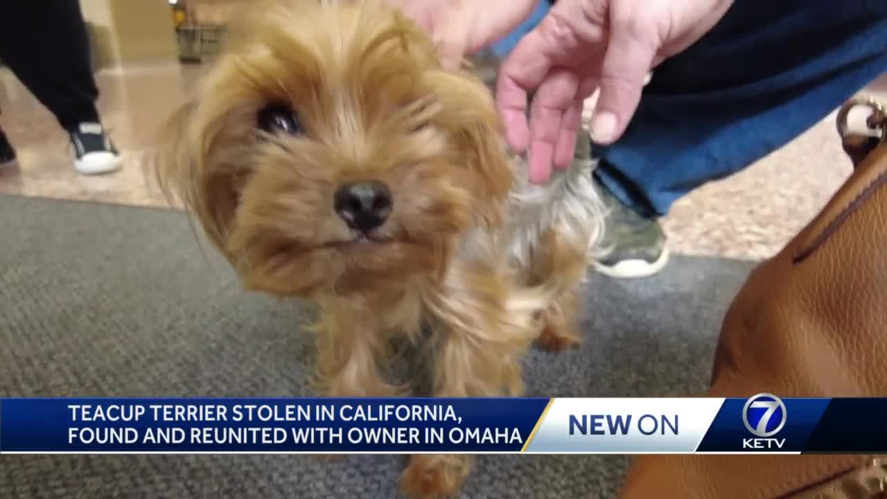 Teacup terrier reunited with owner