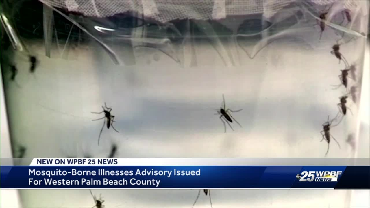 Mosquito-borne disease detected in Palm Beach County