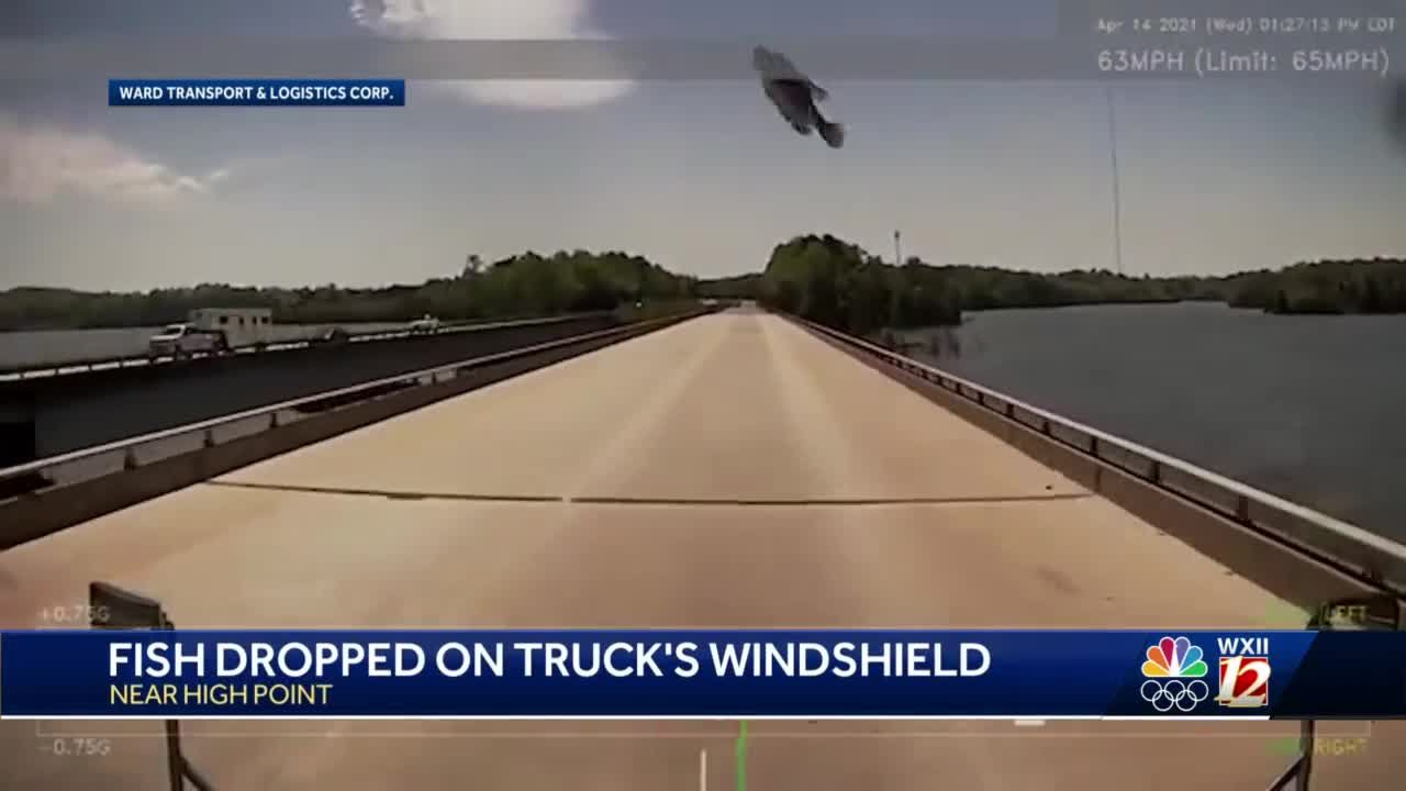 High Point trucker shocked as fish caught by hungry bird dropped from sky onto windshield