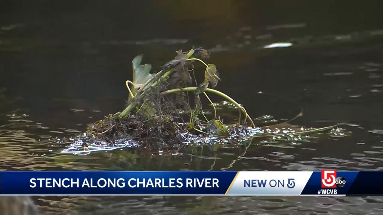 'Dead something:' Heavy rain leaves Charles River reeking of death, slicked with oil