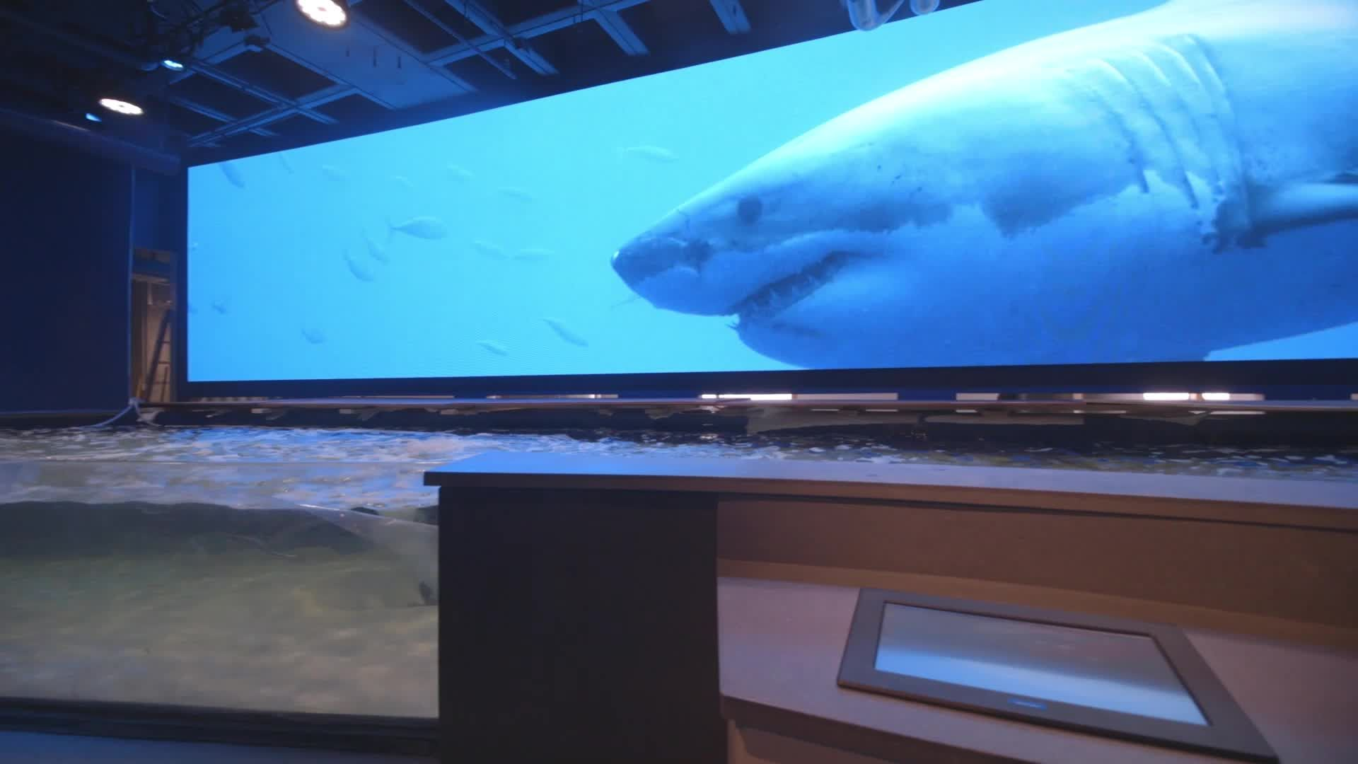 Shark Discovery touchpool opening soon at Aquarium