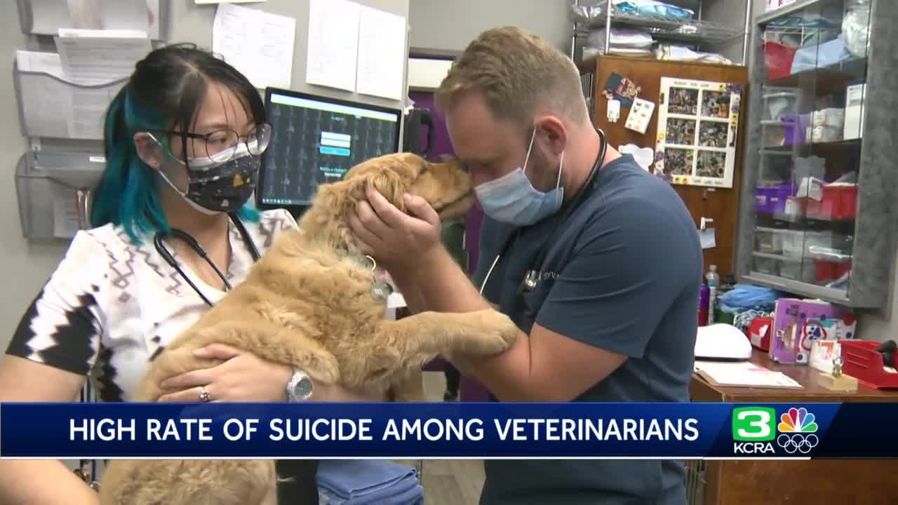 Veterinarians speak out about high rate of suicides in industry