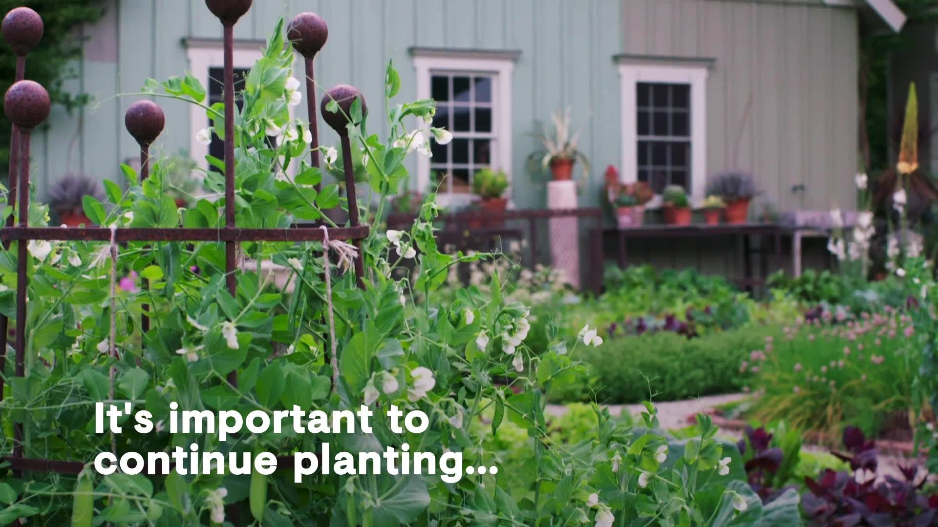 Bunny Williams Shows How to Create a Potager, AKA a French-Style Garden