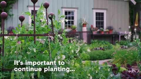 preview for Bunny Williams's Tips for Creating an Edible Garden in Any Size Yard