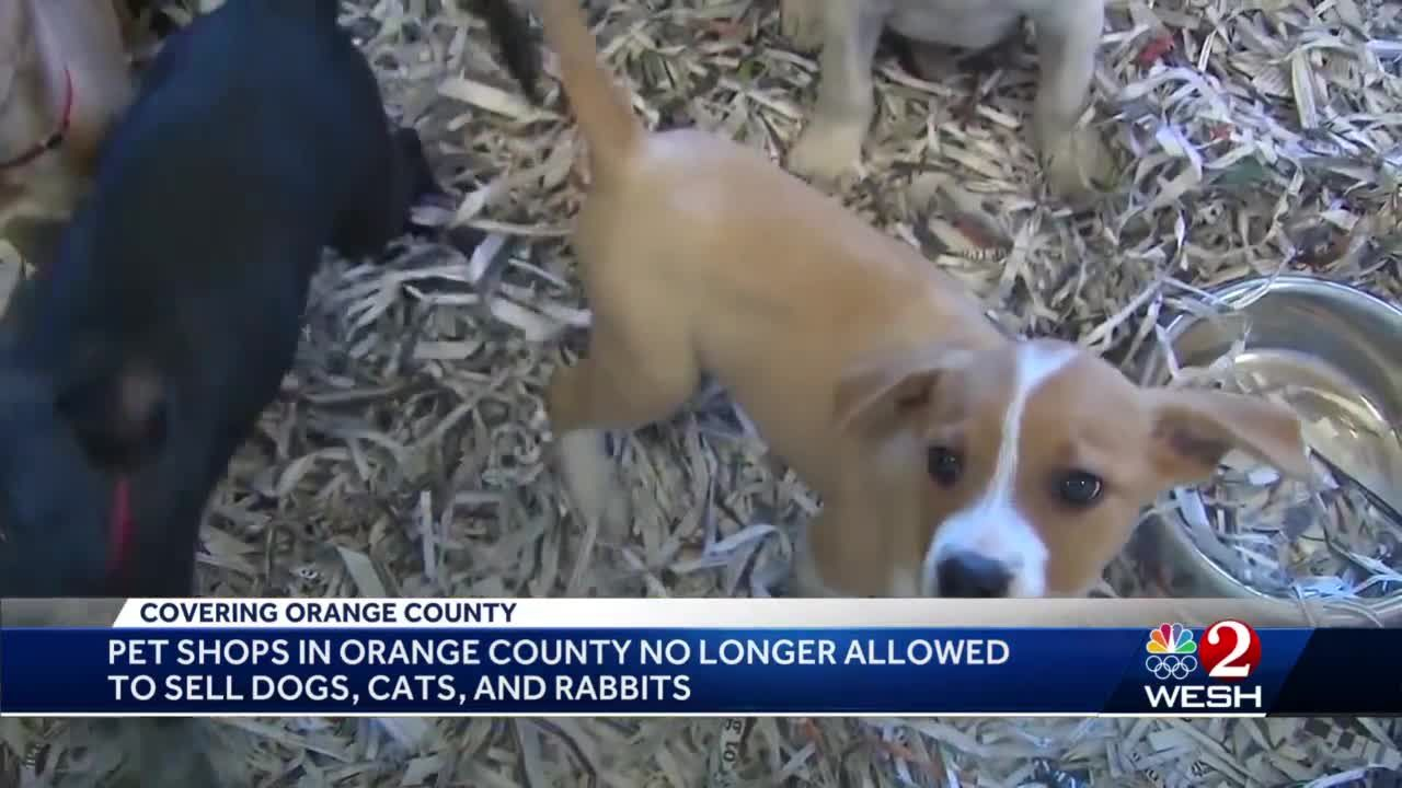 Pet shops in Orange County no longer allowed to sell dogs, cats and rabbits