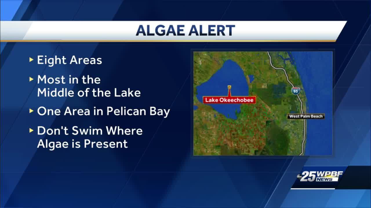 South Florida blue-green algae health alerts