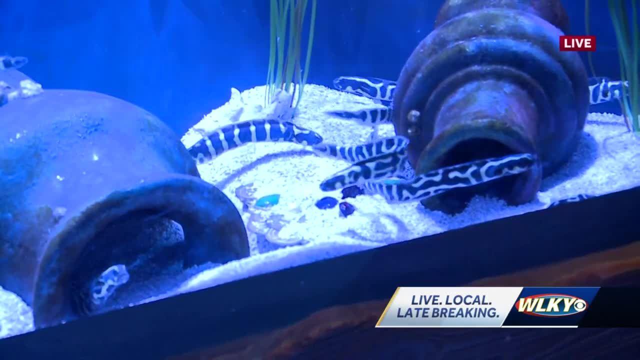 Newport Aquarium makes $1 million investment with Shipwrecked exhibit