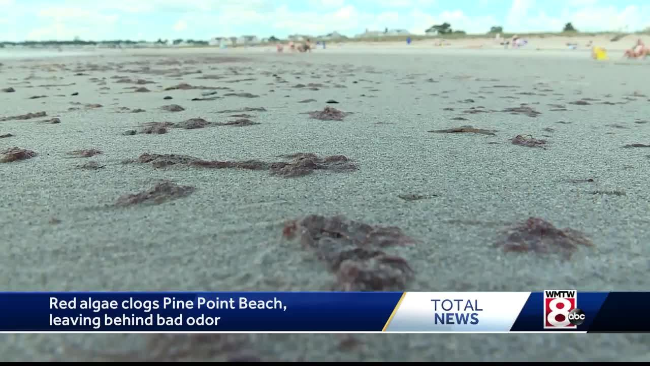 Algae leaving bad odor at Pine Point Beach