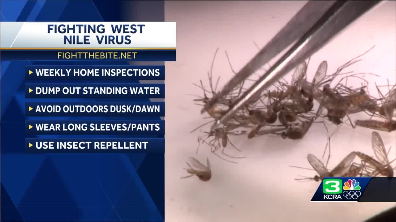 What you need to know about fighting the bite this mosquito season in NorCal