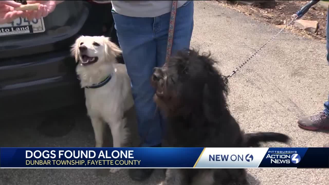 Woman rescues two dogs from woods in Fayette County