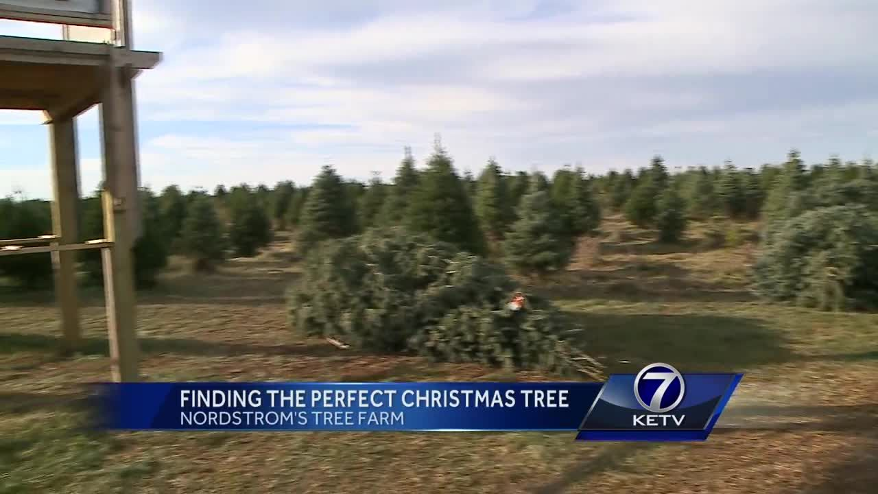 Finding the perfect Christmas tree at Nordstrom\'s Tree Farm
