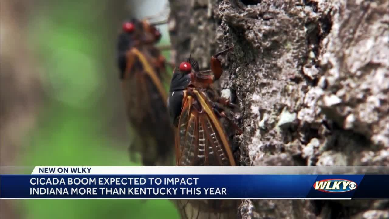Cicadas will invade more of Indiana than Kentucky: What to expect