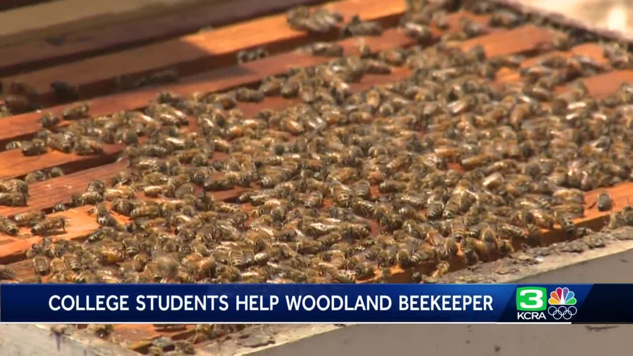 How college students are helping a Woodland beekeeping business