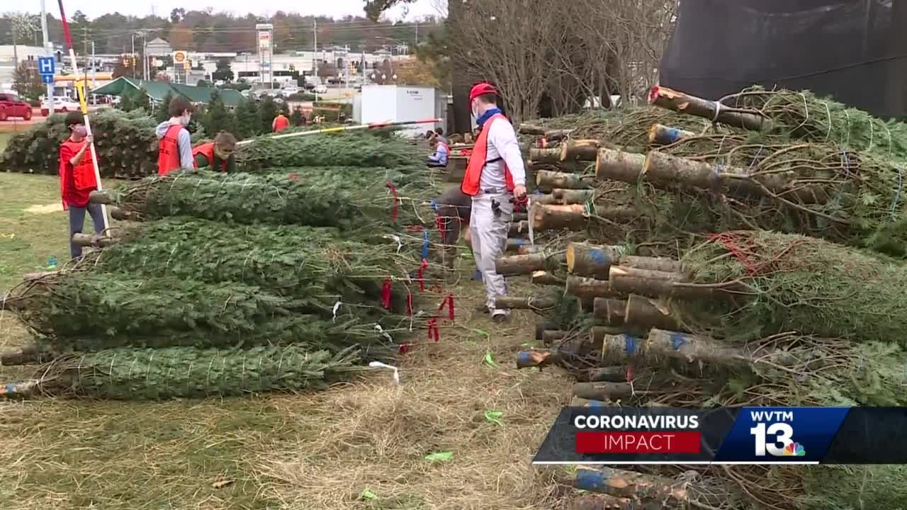 Christmas Tree Sales and COVID