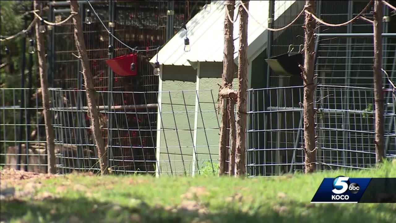 More than 350 animals seized from Norman property during animal welfare investigation